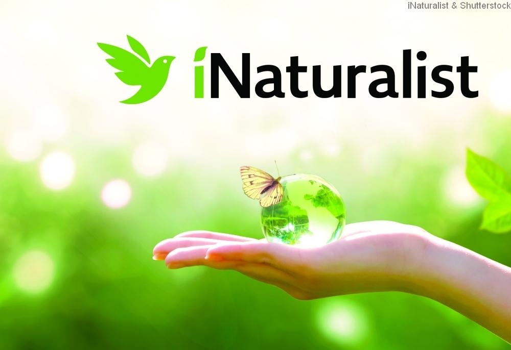 Foto: iNaturalist & Shutterstock